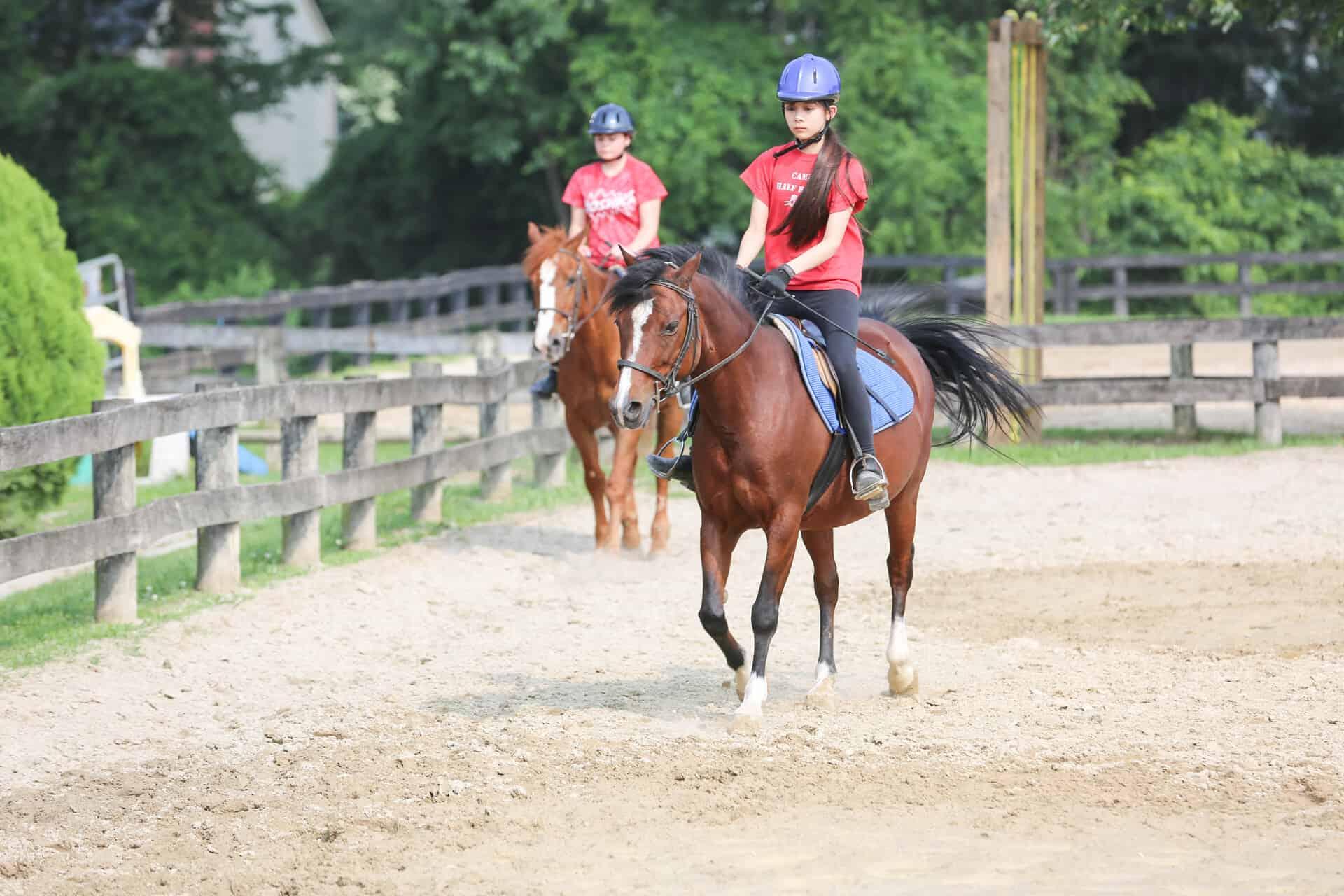 horse-center-3
