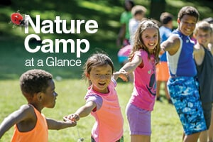 nature camp at a glance image