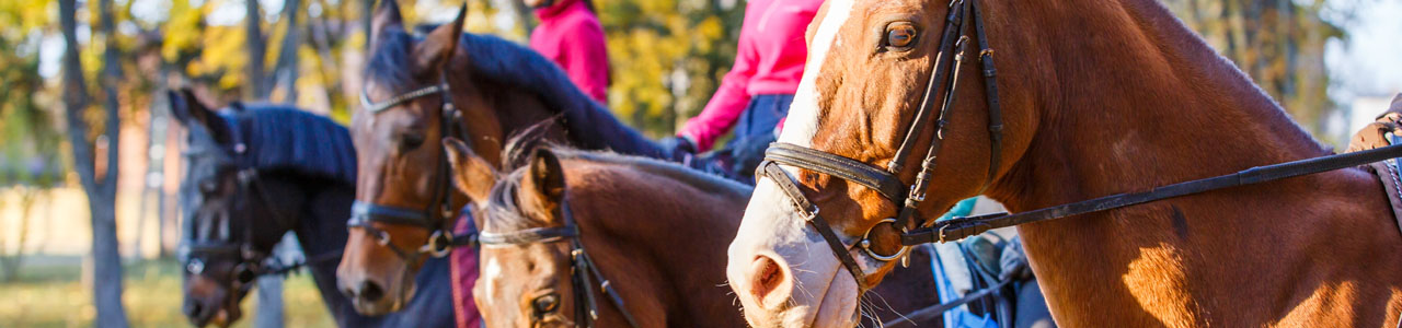 Columbia Horse Center - Columbia Association