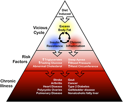 Over fat diet triangle
