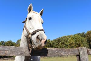 Columbia Horse Center horse