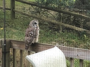 Owl in Open Space