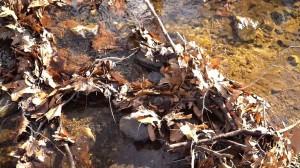 Healthy stream with leaf debris